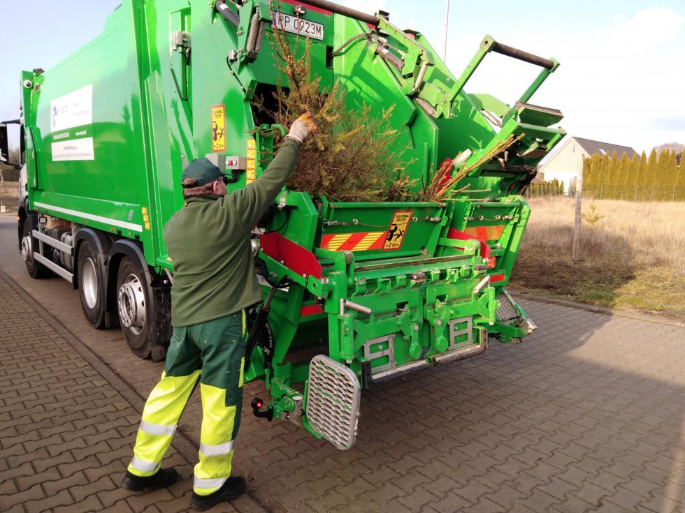 Świąteczne drzewka - bioodpady czy gabaryty?
