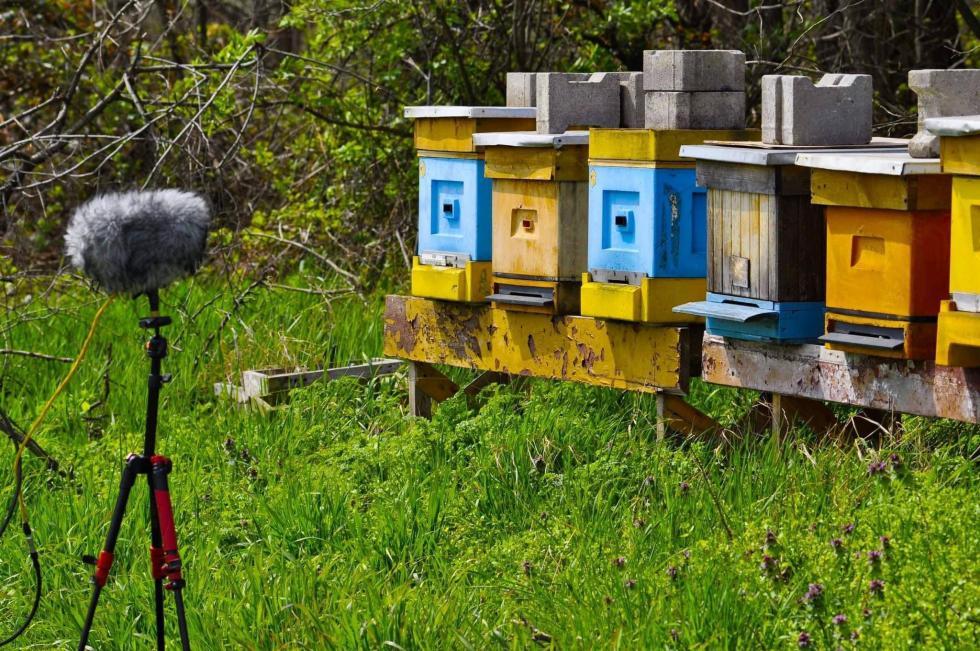 Co wulu piszczy? Studentka UPWr bada jak komunikują się pszczoły